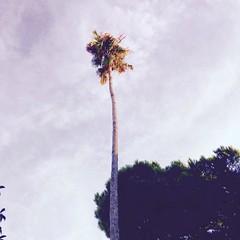 #palmera #centrecivic #canverdaguer #porta #noubarris