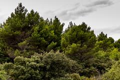 Provence - Randonnée à Alleins dans la forêt de chênes