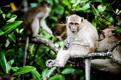 monkeys-1019