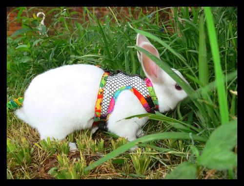 Bunny Walk