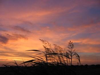 tall grass prairie sunrise