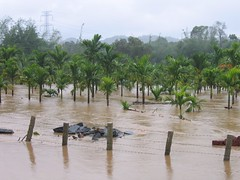 Kollibacchalu Dam -Malenadu Heavy Rain Effects Photography By Chinmaya M.Rao   (153)