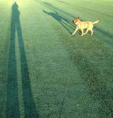 astroturf shadow bailey 2