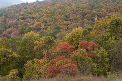 """CRW_4544: Skyline Drive Foliage • <a style=""""font-size:0.8em;"""" href=""""http://www.flickr.com/photos/54494252@N00/8705380/"""" target=""""_blank"""">View on Flickr</a>"""