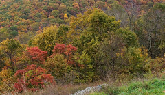 """CRW_4546: Skyline Drive Foliage • <a style=""""font-size:0.8em;"""" href=""""http://www.flickr.com/photos/54494252@N00/8705403/"""" target=""""_blank"""">View on Flickr</a>"""