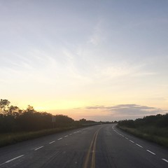 The Road Ahead. Day 187. Should be to Tampico by Saturday. Savannah has been a champ, we did 20 miles the past two days and she didn't complain at all. Hopefully we'll be able to knock out another 20 today. #TheWorldWalk #travel #mexico #wwtheroadahead