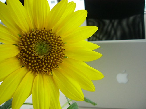 A sunflower and a Mac