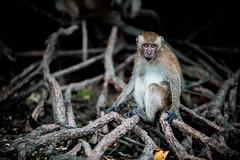 monkeys-1007