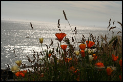 wild flowers by the seaside