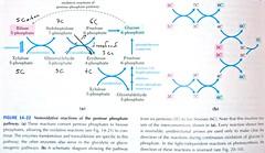 Lehninger-Pentose-Phosphate