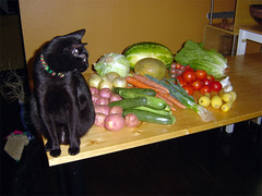 Cat and vegetables