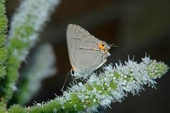 Butterfly_2006-08-05-170753