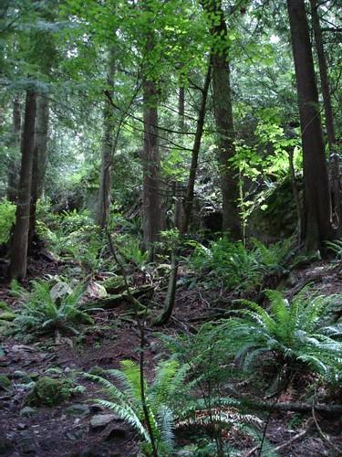 Bosques primarios en Vancouver