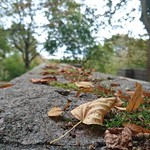 """Leaves are starting to fall down. Autumn is really here. #autumn #awesomepicture #ängbykyrka #leaves #circleoflife #Bromma #Stockholm #visitstockholm #visitsweden #z5compact #Sony #xperia #nofilter <a style=""""margin-left:10px; font-size:0.8em;"""" href=""""http://www.flickr.com/photos/131645797@N05/21881785400/"""" target=""""_blank"""">@flickr</a>"""