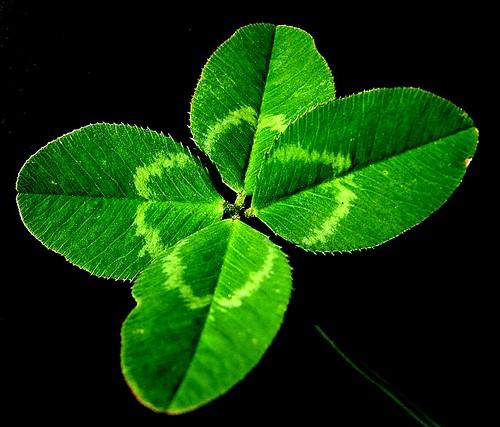suerte Trébol de 4 hojas