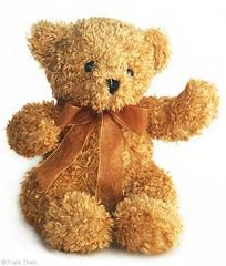 Cutest Teddy Bear