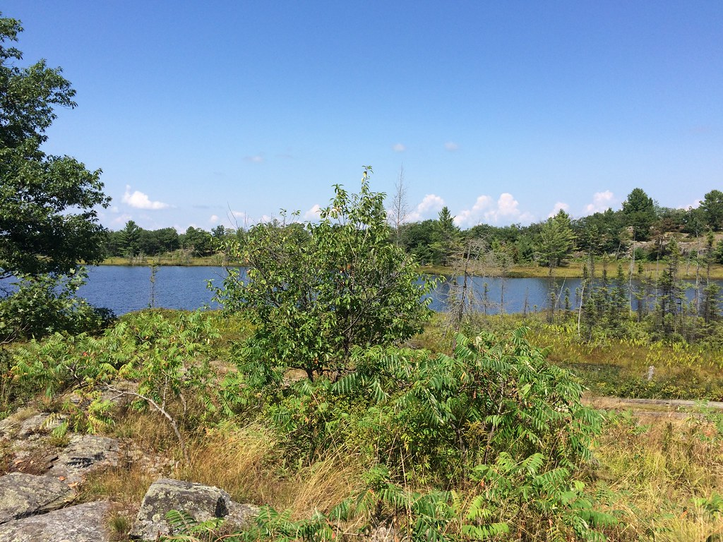 Torrance Barrens Dark Sly Reserve in Muskoka