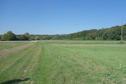 En face de l'école, au milieu d'un champ un point blanc se découpe ...