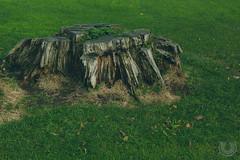 A Stump