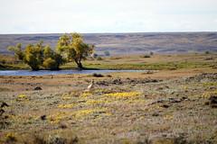 American Prairie Reserve 4