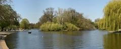 Boating Lake, Regent's Park, London