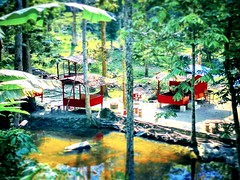 Chalet Warisan Hati Rimba,Kemensah Ulu Kelang, 68000 Ampang Jaya, Selangor 013-231 5711 https://maps.google.com/?cid=6661119350354708072&hl=en&gl=gb #tree #nature #travel #holiday #trip #Asian #Malaysia #Selangor #ampang #travelMalaysia #holidayMalaysia #