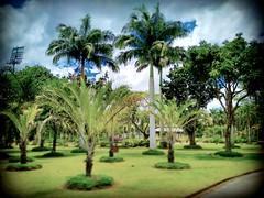 Jublee Recreation Ground, 93450 Kuching, Sarawak https://goo.gl/maps/oV4QRDyjwM22  #travel #holiday #Asian #Malaysia #Sarawak #Kuching #travelMalaysia #holidayMalaysia #旅行 #度假 #亚洲 #马来西亚 #沙拉越 #古晋 #trip #马来西亚旅行 #traveling #马来西亚度假  #tree 树木 #sky #蓝天 #grass
