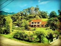 Jalan Taman Zooview, Kampung Kemensah, 68000 Ampang, Selangor https://maps.google.com/?q=3.214664,101.772212&hl=en&gl=gb  #tree #nature #travel #holiday #trip #Asian #Malaysia #Selangor #ampang #travelMalaysia #holidayMalaysia #树木 #旅行 #度假 #亚洲 #马来西亚 #雪兰莪 #