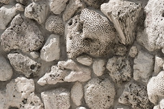 """CRW_1666: Coral Wall • <a style=""""font-size:0.8em;"""" href=""""http://www.flickr.com/photos/54494252@N00/10330070/"""" target=""""_blank"""">View on Flickr</a>"""