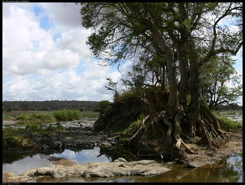 During the riverwalk at Olifants (by gwendolen)