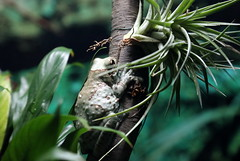 white_frog_moody_gardens_5dIV3805
