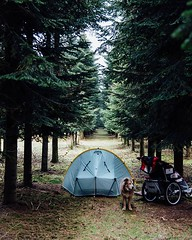 Day 717 - One of the best parts about the walk is actually not knowing where I'm going to sleep each night. Rather than ending in a hotel I'll find a nook to make camp in. Sometimes they're not ideal, but more often than not I'm able to find a really peac