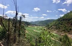 Terassenfelder