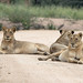 Kruger May 2018 (19 of 32)