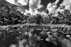 Jardin Botanique de Pamplemousse (Ile Maurice)