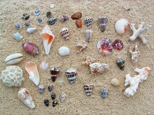 Little pieces of Fiji