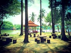 Shah alam, Selangor https://goo.gl/maps/Cxy28GH2nkR2  #travel #holiday #Asian #Malaysia #Selangor #shahalam #travelMalaysia #holidayMalaysia #旅行 #度假 #亚洲 #马来西亚 #雪兰莪 #沙啊南 #trip #马来西亚旅行 #traveling #马来西亚度假 #tree #Lake #restingstop #Park #公园 #tasik