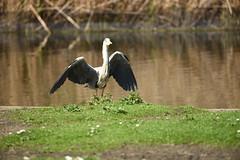 Heron Landing - 3, Regent's Park, London