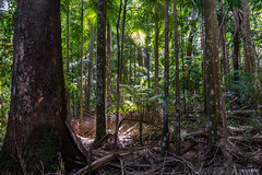Forest floor & palms