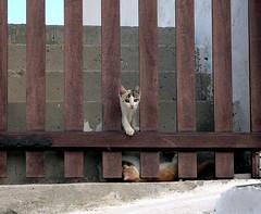 Kittens of Kastro