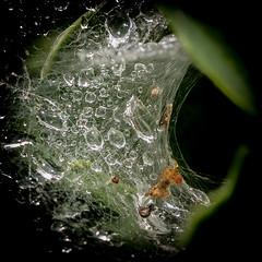 Waterdruppels op spinnenweb
