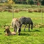 Zoo- und Freizeitpark Jaderberg