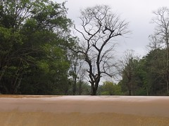 Kollibacchalu Dam -Malenadu Heavy Rain Effects Photography By Chinmaya M.Rao   (78)