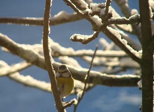 IMG33285. Bird.