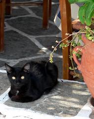 Giorgos Boulis Taverna Cat
