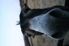 bougre d'âne