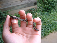 Baby Water Snake