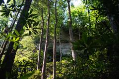 Wildcat Trail