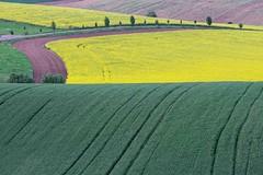 Fields of South Moravia 1