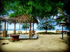 45400 Sekinchan, Selangor https://goo.gl/maps/aBCfdsTrwvr  #travel #holiday #traveling #trip #Asian #Malaysia #旅行 #度假 #亚洲 #马来西亚  #วันหยุด #การเดินทาง #ホリデー #휴일 #여행 #Sekinchan #Selangor #海滩 #beach #pantai #Touristattractions #travelMalaysia #tree #树 #旅游景点